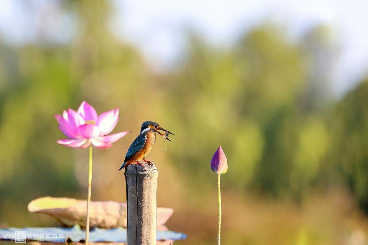 It's photo op time as lotuses bloom in central Vietnam