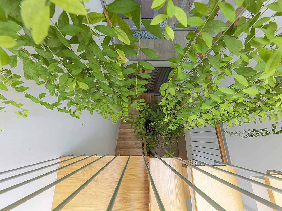The curved facade allows natural light to penetrate the deep and long tube house, helping plants to grow.