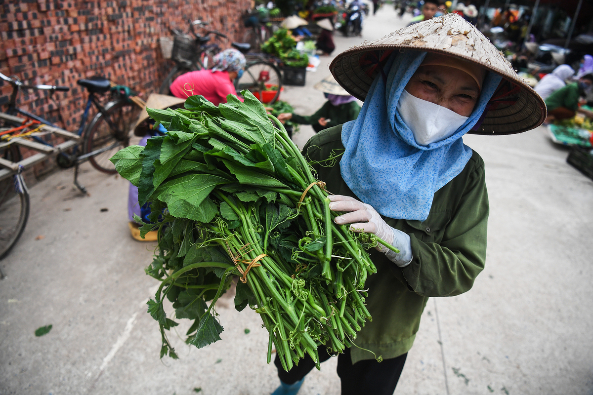 A woman from Ha Loi village in Hanoi brings home-grown vegetables to sell at a market, a day after Covid-19 lockdown on her village was lifted, May 7, 2020. Photo by VnExpress/Giang Huy.