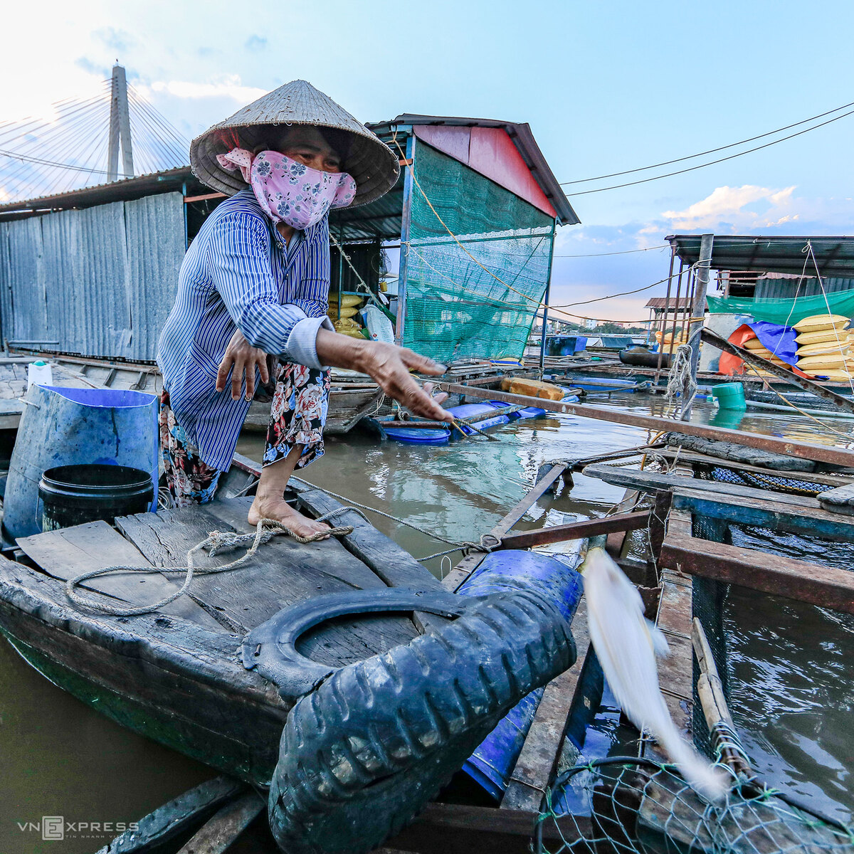 Mekong Delta fishers in distress as fish die en masse