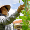 Japanese woman spends best years of life helping Vietnamese farmers