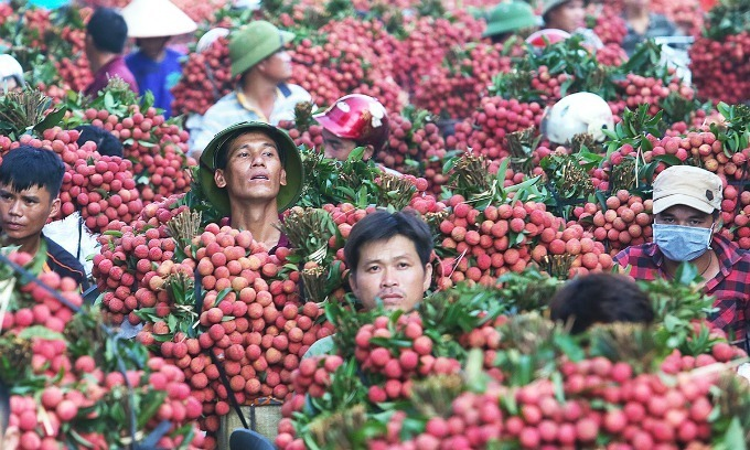 PM allows over 300 Chinese traders to enter Vietnam to buy lychees