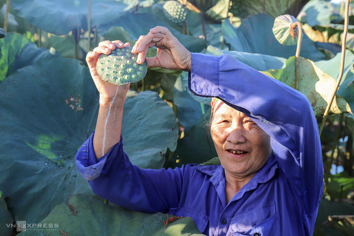 Ha Tinh lotus harvest season gets underway