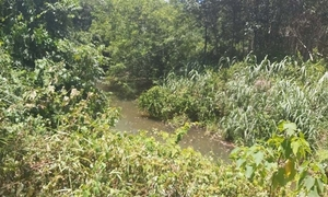 Boy succumbs in Vietnam forest as teen culprit fumbles virtual rescue