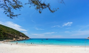 Dolphin gets lost off Vietnam's Cam Ranh coast