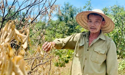 ​Heat waves cause misery to farmers in central Vietnam