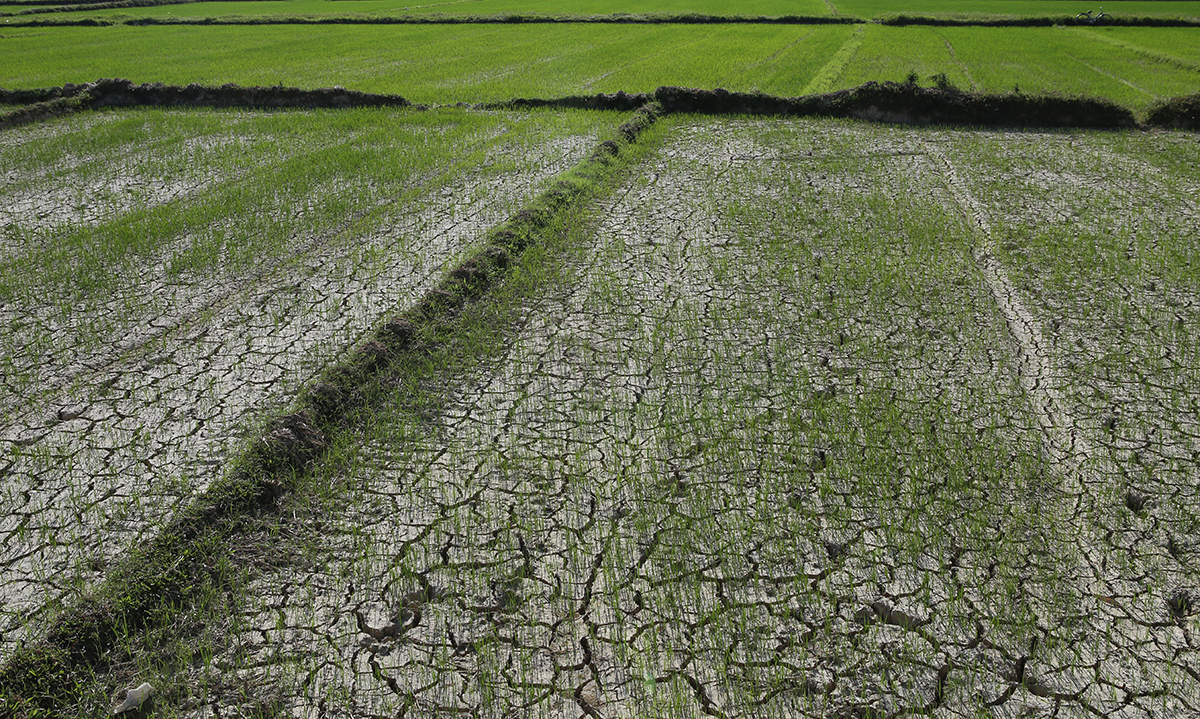 A cracked rice field in Nghi Loc District of Nghe An Province, June 2020. Photo by VnExpress/Nguyen Hai
