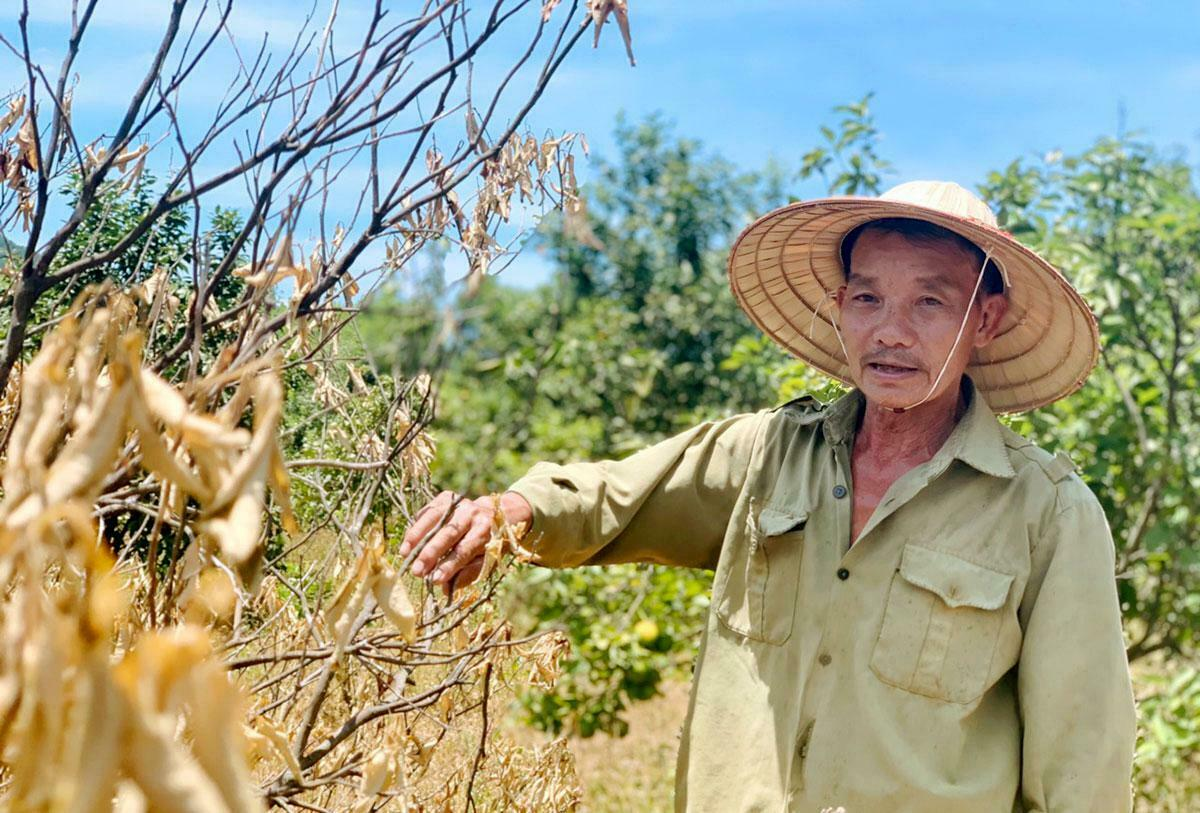 Nguyen Dinh Sen stands by an orange tree with burned leaves due to the scorching sun in his farm in Huong Khe District of Ha Tinh Province. Photo by VnExpress/Duc Hung