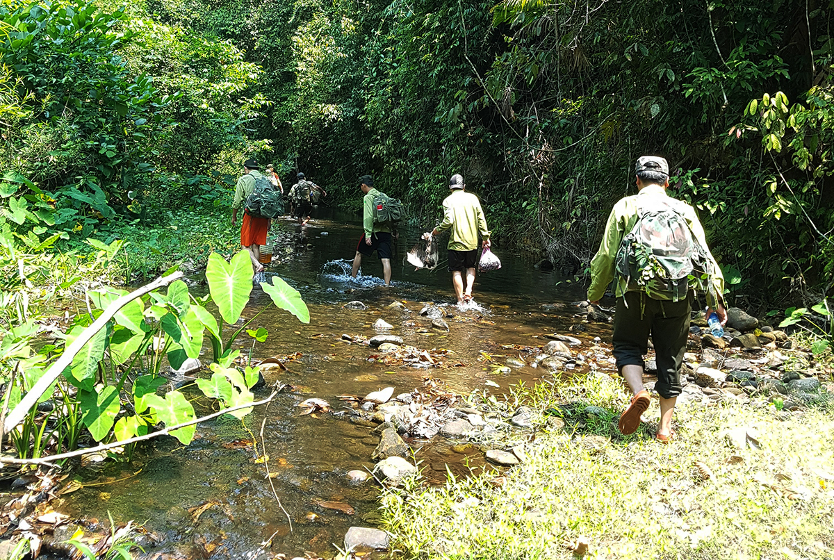 A team of six rangers of the Elephant Habitat and Species Conservation Area in Vietnams central province of Quang Nam trek through a forest to check on a herd of elephants, June 2020. Photo by VnExpress/Dac Thanh