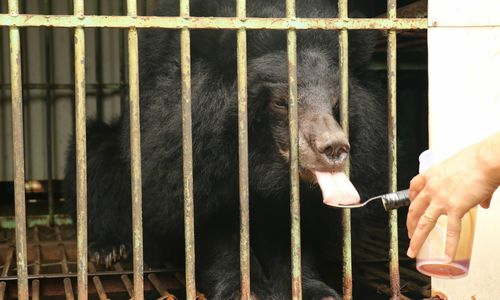 Last captive bear in Central Highlands province released