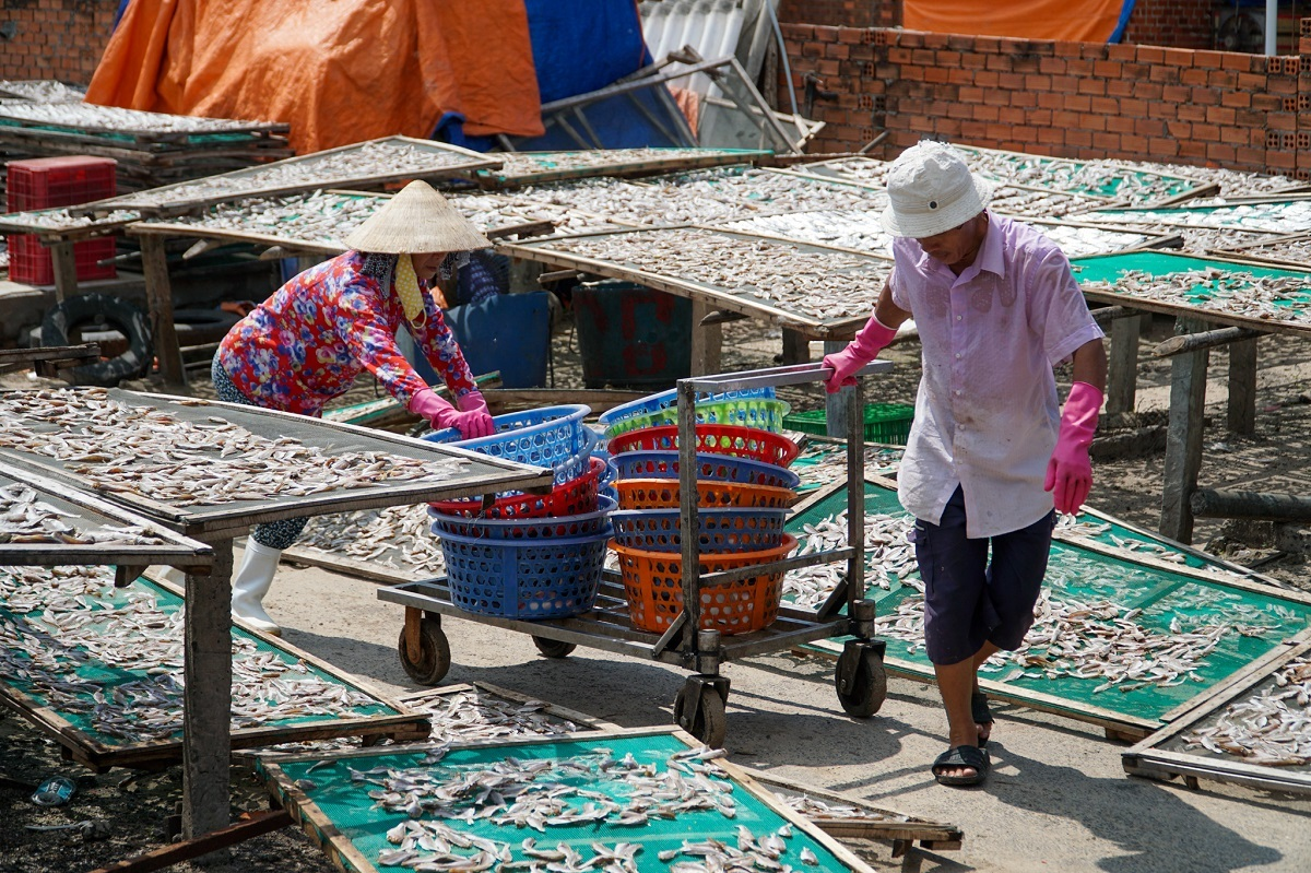Under the blazing noon sun, workers use a trolley to bring out baskets of fish to the drying yard that is a few meters away from the other stations.