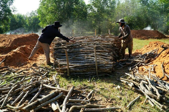 Acacia and eucalyptus wood from local plantations is readied for burning.VnExpress / Viet Quoc's photo.