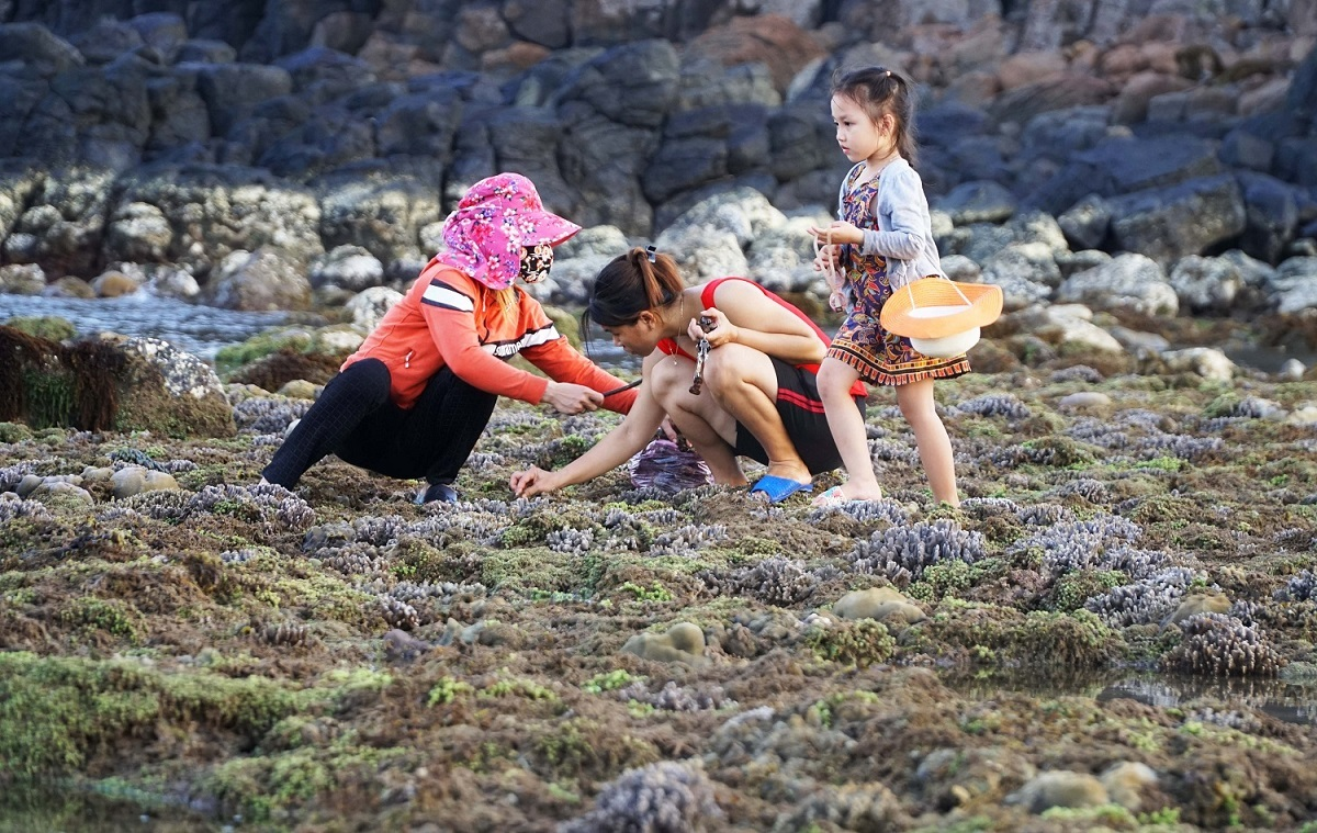 Local people in Binh Hai commune pick up seaweed, catch snails and take their children for a walk in Ganh Yen.