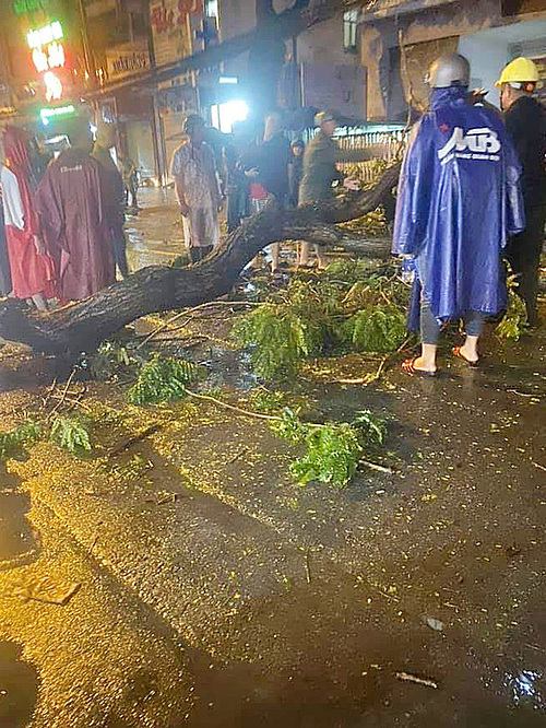 People inspect a tamarind tree branch that fell and killed a man on To Hien Thanh Street, HCMC, on the night of June 13, 2020. Photo by To Quoc Newspaper.