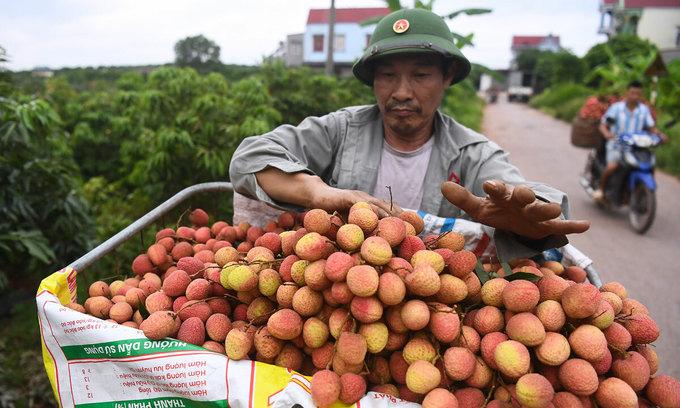 Vietnamese lychees make it to Singapore supermarket shelves