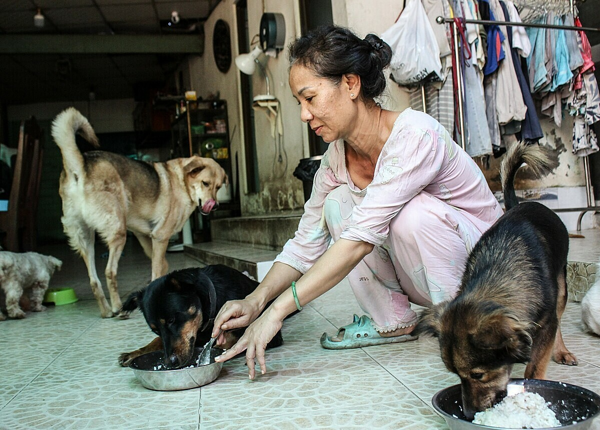 Thuy feeds her canines with rice, ground meat and home-grown vegetables. They eat six kilograms of rice and three kilograms of meat every day. Photo by VnExpress/Diep Phan.