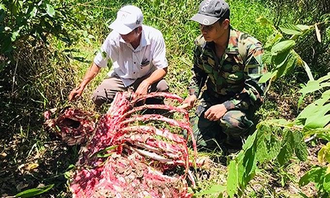 Endangered gaur killed in national park by poachers