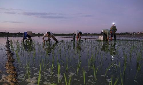 Northern Vietnam suffers longest heat wave in 49 years