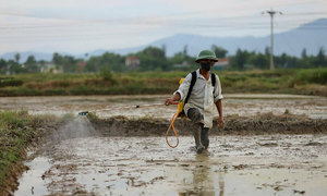 Vietnam can cut pesticide use significantly without productivity loss: expert