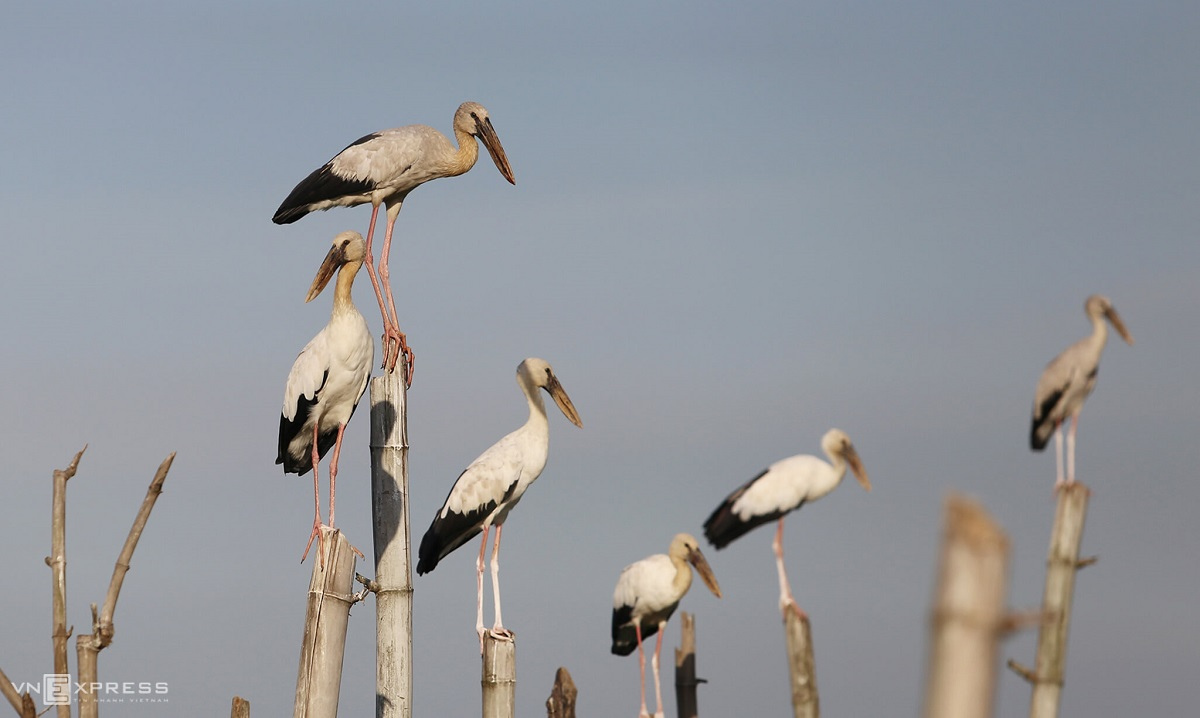 Central coast town haven for endangered birds