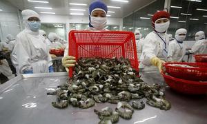 Shrimp exports unscathed by global pandemic