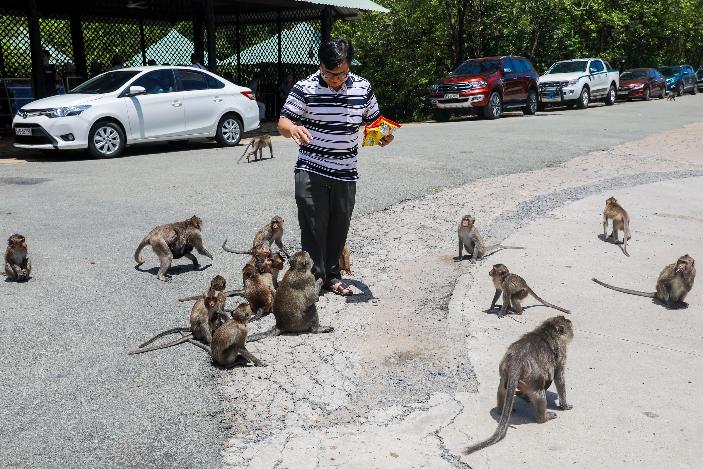 Saigon monkey colony provides feral delight