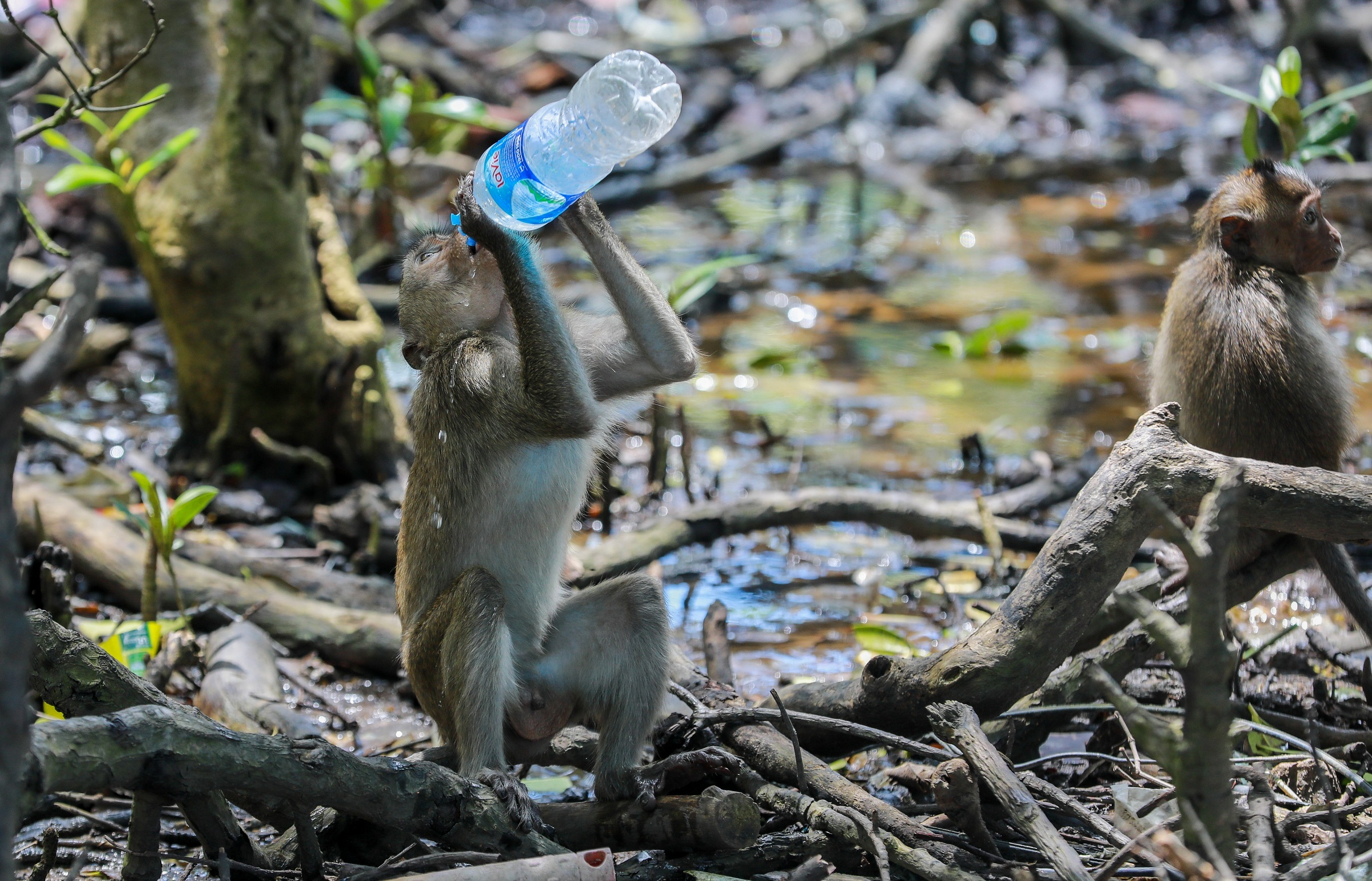 Saigon monkey colony provides feral delight