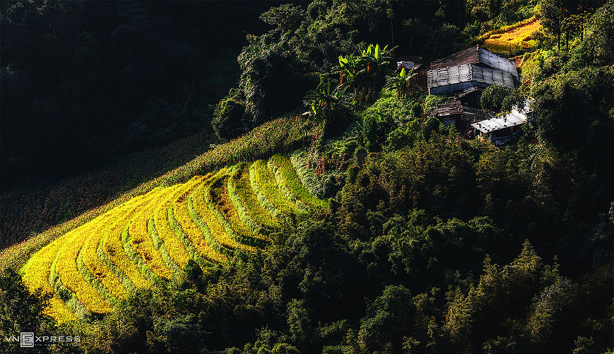 The mountain is submerged in the golden color during rice harvest season during July and August.