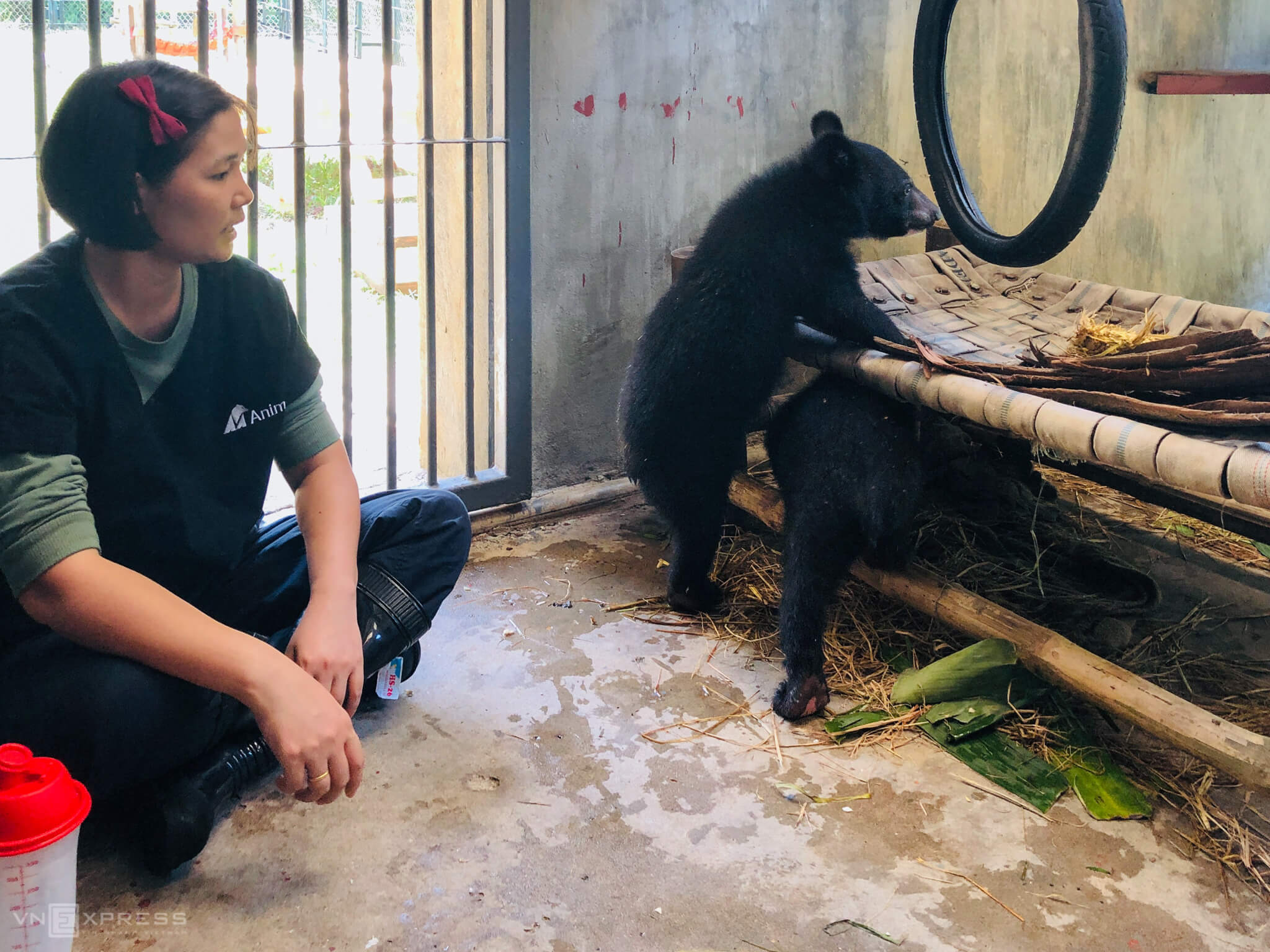 Rescued cubs equipped with necessities at Vietnam center