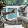 Saigon zoo operator posts $800,000 loss