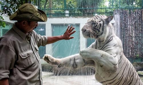 Saigon zoo operator posts $800,000 loss