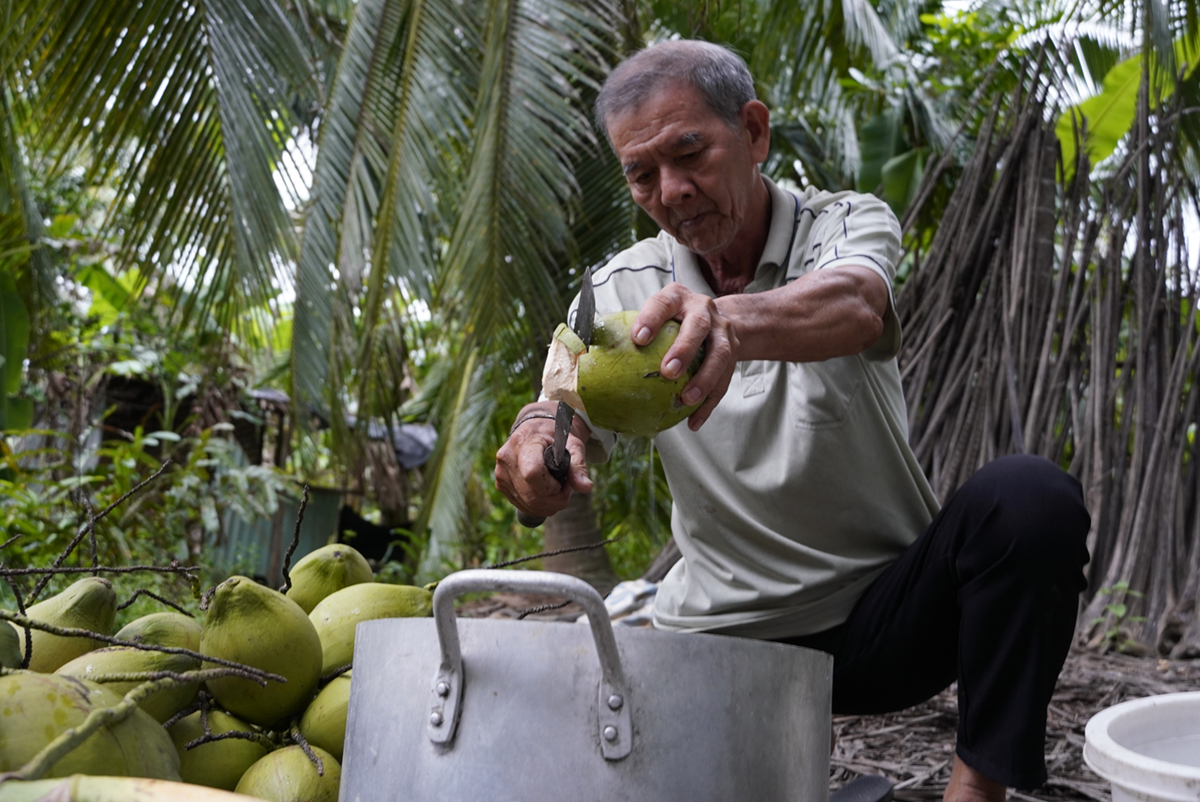 Coconut farmer Tran Trung Tac opens a dwaft coconut fruit to get water. Photo by VnExpress/Hoang Nam