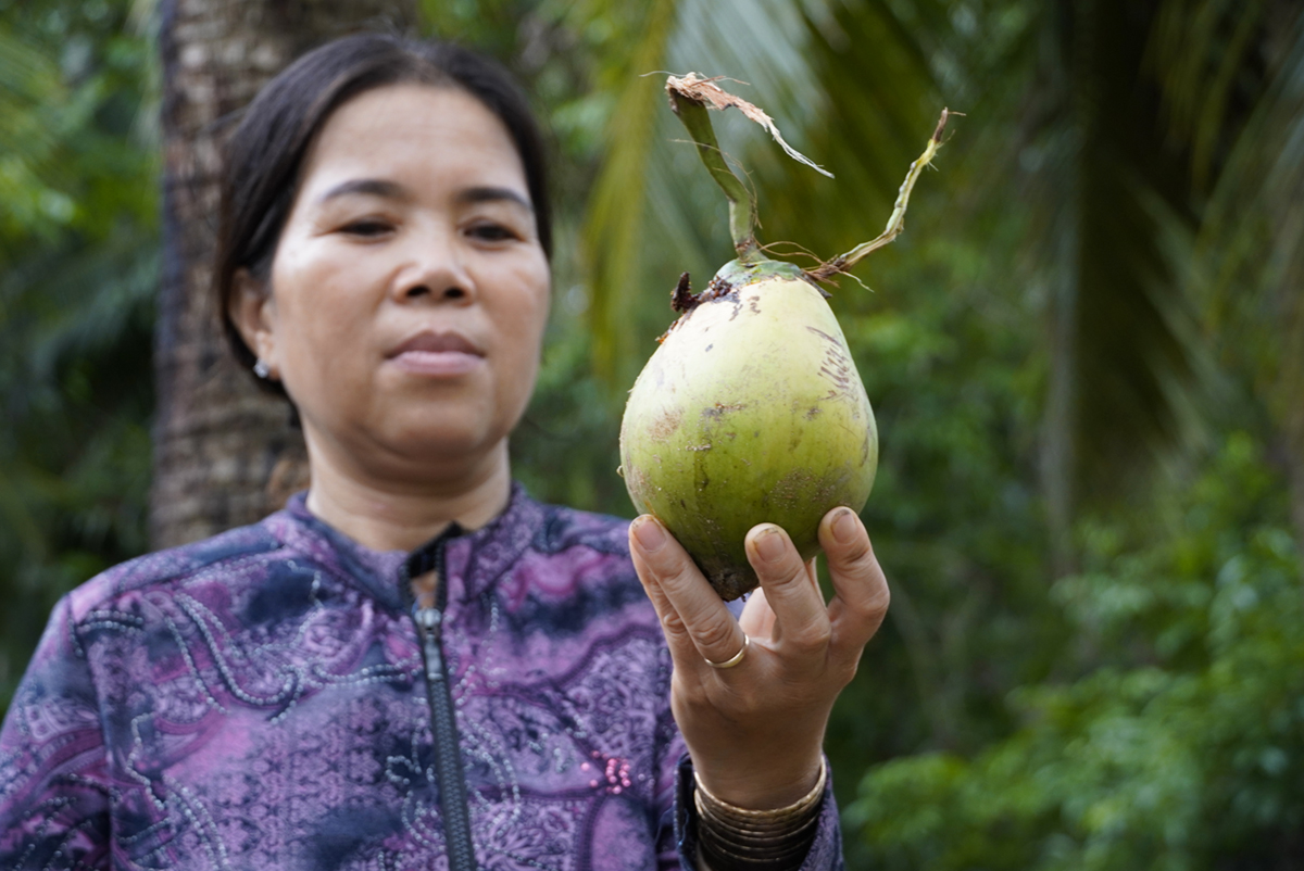 A woman holds a dwaft coconut whose size is just half compared to normal. Photo by VnExpress/Hoang Nam