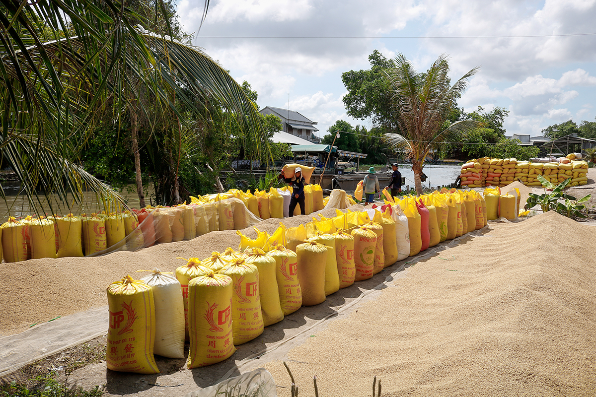 Porter puts rice into bag and load it onto ships for delievering in Long My District of Hau Giang Province in the Mekong Delta, March 2020. Photo by VnExpress/Nguyet Nhi