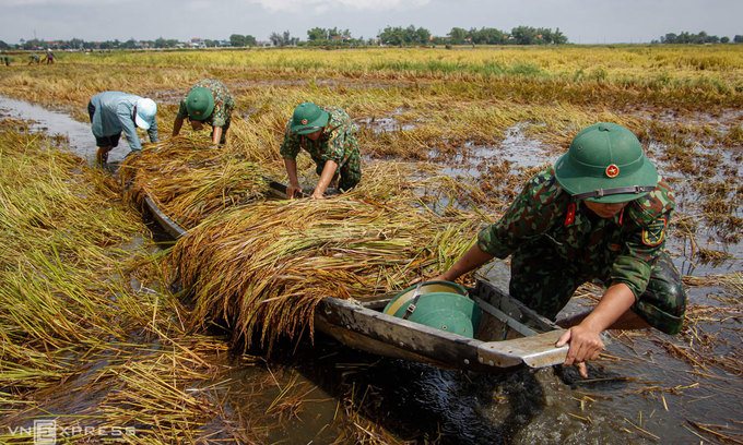 Vietnamese rice now more pricey than Thailand's