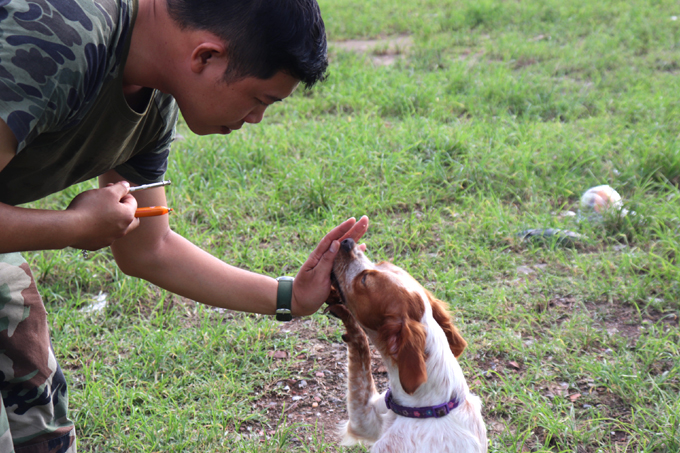Dong Minh Toan gives Luna, a Brittany Spaniel breed, a treat for completing a task. Photo by VnExpress/Van Hieu.
