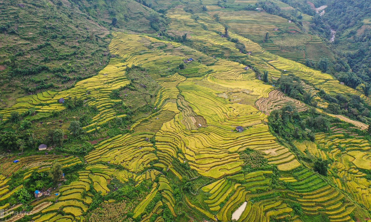 The golden glow of terraced rice fields in Bat Xat District, home of 3,000 hectares of rice fields, which are located at Y Ty, Sang Ma Sao, Den Sang and Ngai Thau Communes. The Pa Valley in the communes of Y Ty and Ngai Thau has been recognized as a national monument in 2015.
