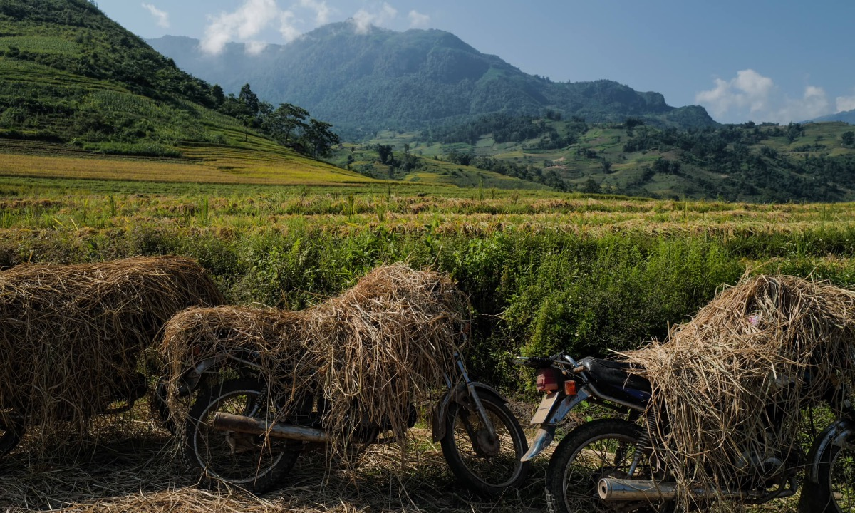 As farmers often spend a whole day to work on their paddy fields, they bring their meals and only come home when all rice plants are taken. Putting their motorbike under the sun, they cover them with dried straw to prevent the heat.