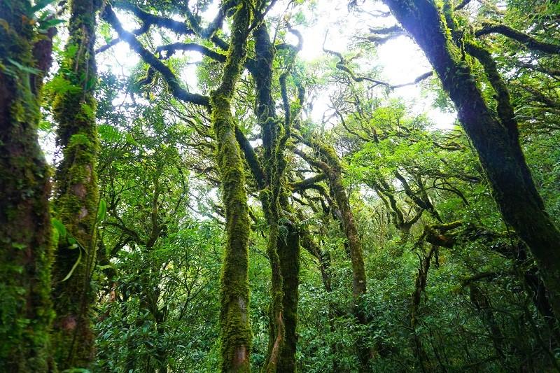 cảnh rừng ma mị khi càng lên cao - Xu Kiên