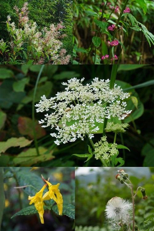 Những đóa hoa dại trên tây côn lĩnh. Photo by Xu Kien.
