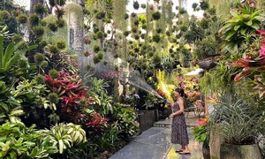 Latin garden adds lush warmth to Mekong Delta home
