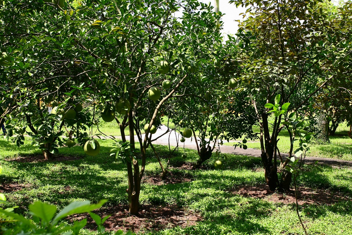 The garden is filled with trees bearing fruits.