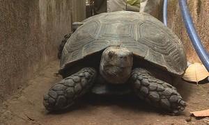 Man caught with endangered turtles, tortoises, under house arrest