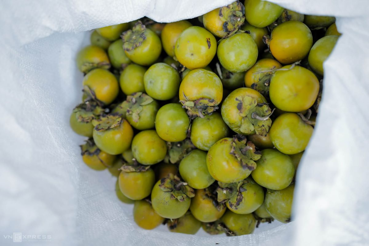 [Good persimmons have gleaming skins with a chartreuse shade, a crispy texture and a gentle sweet taste, farmers say.   In May 2018, the Vanh Khuyen persimmon was certified as a top-grade Vietnamese agricultural product.