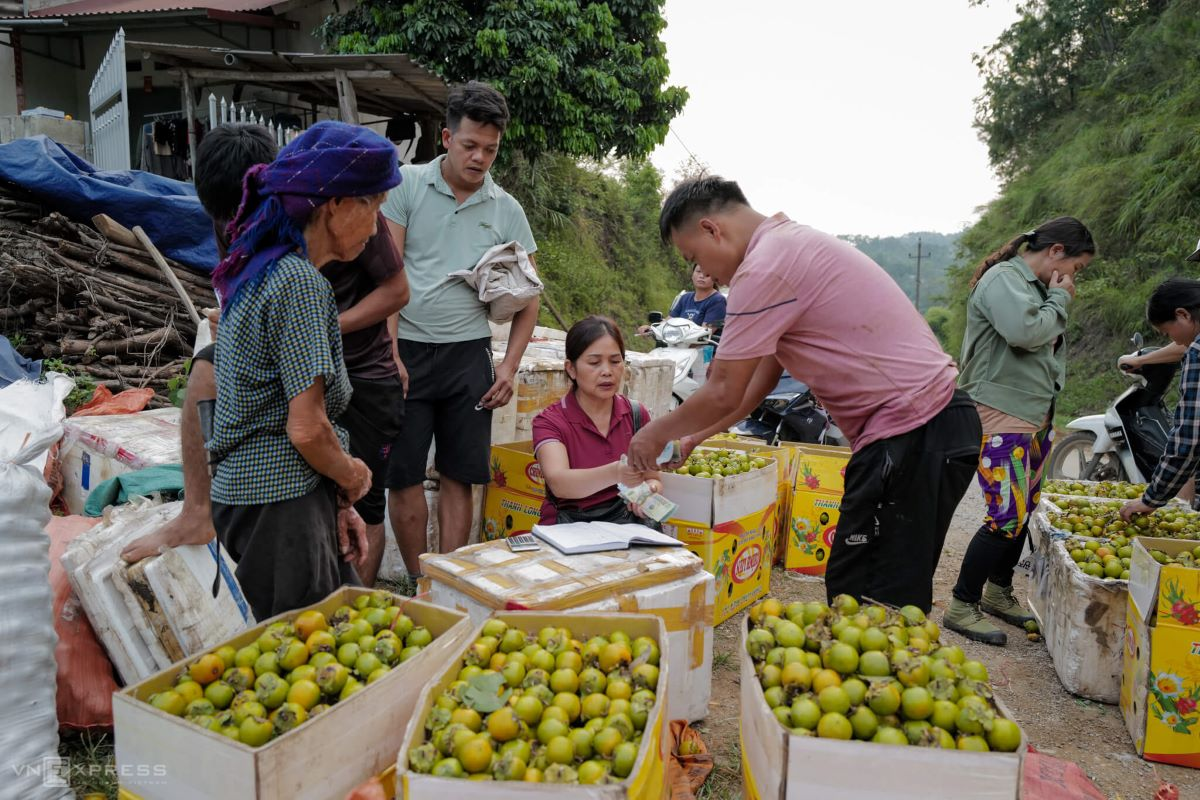 Van Lang is mainly inhabited by the Nung and Tay ethnic minority communities who sustain themselves mainly with rice and persimmon farming.