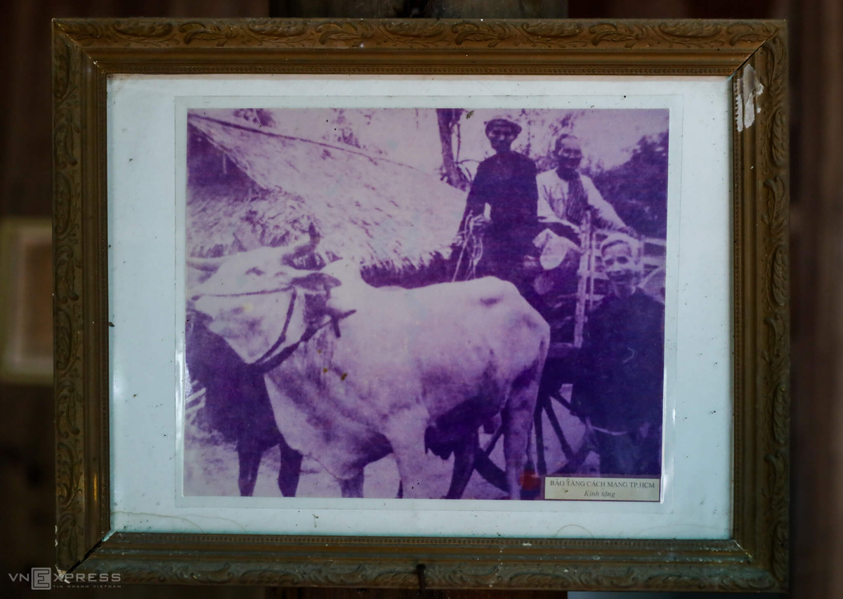 A photo of Trons father (top right corner) on the ox cart which he used to camouflage weapons. The photo is framed by the War Remnants Museum in Ho Chi Minh City and given to his family.