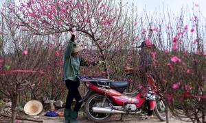Vietnam plans seven-day Lunar New Year break