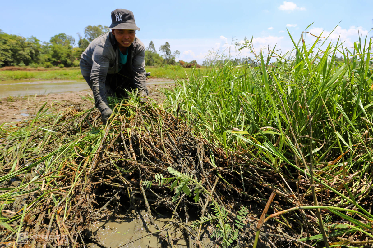 Fishing for compliments in Quang Nam rice fields