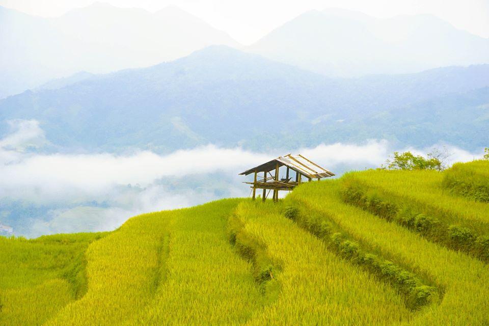 Rice terraced fields in Nam Hong Village. Photo by Xu Kien.