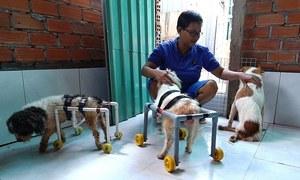 Saigon woman, samaritan, helps lame dogs, cats walk again